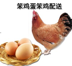 笨鸡蛋笨鸡配送