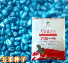 苏单一号 玉米种子 高产 5500粒/袋