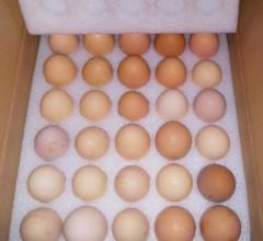 母家商行鸡蛋土鸡蛋 笨鸡蛋 无添加 营养新鲜 1件