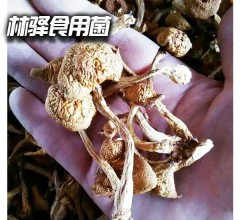 兴安林驿特级蘑菇(滑子菇)干品 500g
