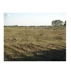 优质牧草饲料 苜蓿草捆