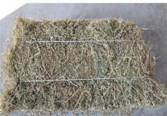 供应河北/辽宁/吉林喂牛的苜蓿草
