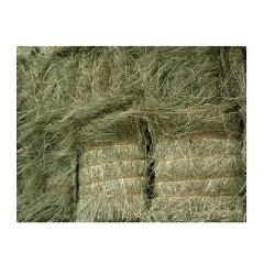 动物吃的羊草颗粒饲料