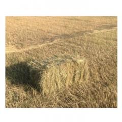东北羊草生产厂家 牛羊青储饲料