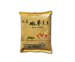 玉米种子   改良嫩单13   2.5Kg/袋