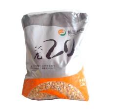 玉米杂交种  久龙20