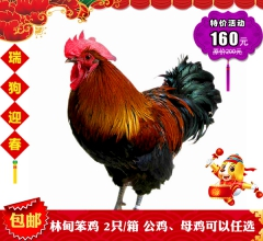 【 春节特惠】林甸笨鸡 2只/箱 公鸡、母鸡可以任选