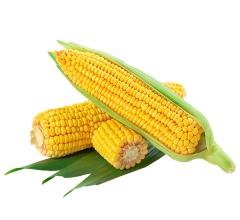 玉米 10穗起拍