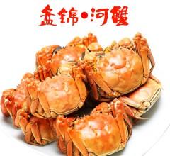 盘锦特产鑫达河蟹蟹稻共生 盘锦河蟹