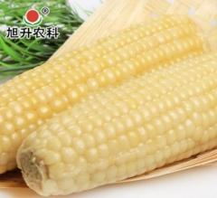 速冻粘玉米批发2000 穗