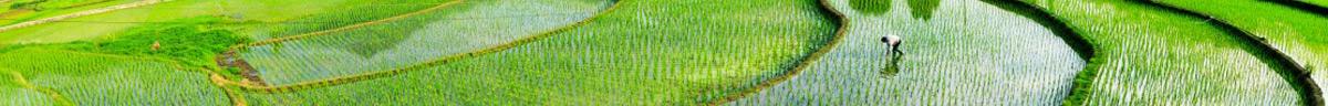 黑龙江背荫河新禾米业