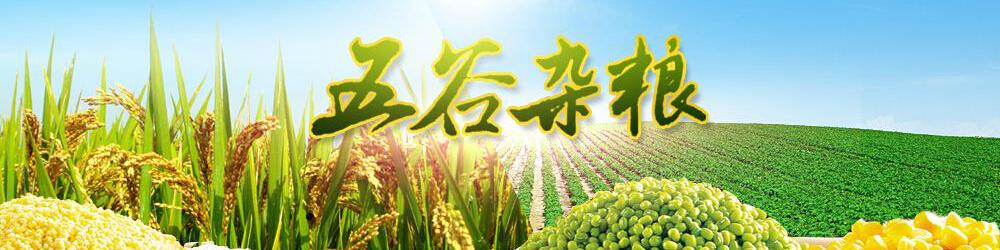 二站镇曙光村娄家寨粮食种植专业合作社
