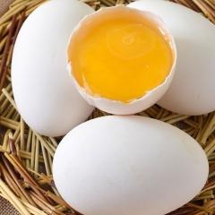鹅  蛋  12枚